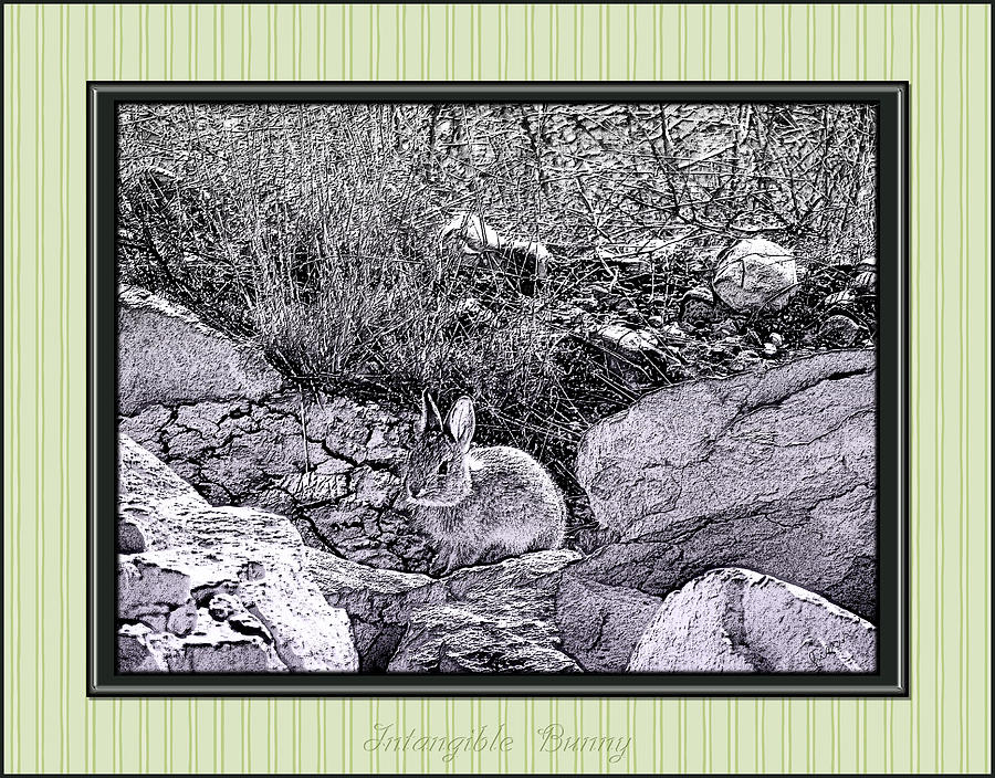 Intangible Bunny Photograph  - Intangible Bunny Fine Art Print