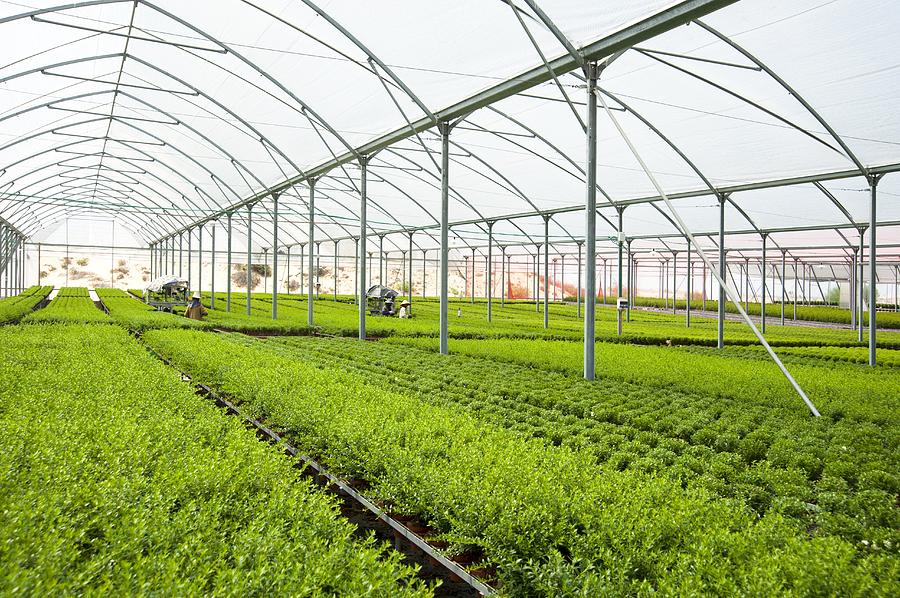 Interior Of A Greenhouse Photograph by Photostock israel