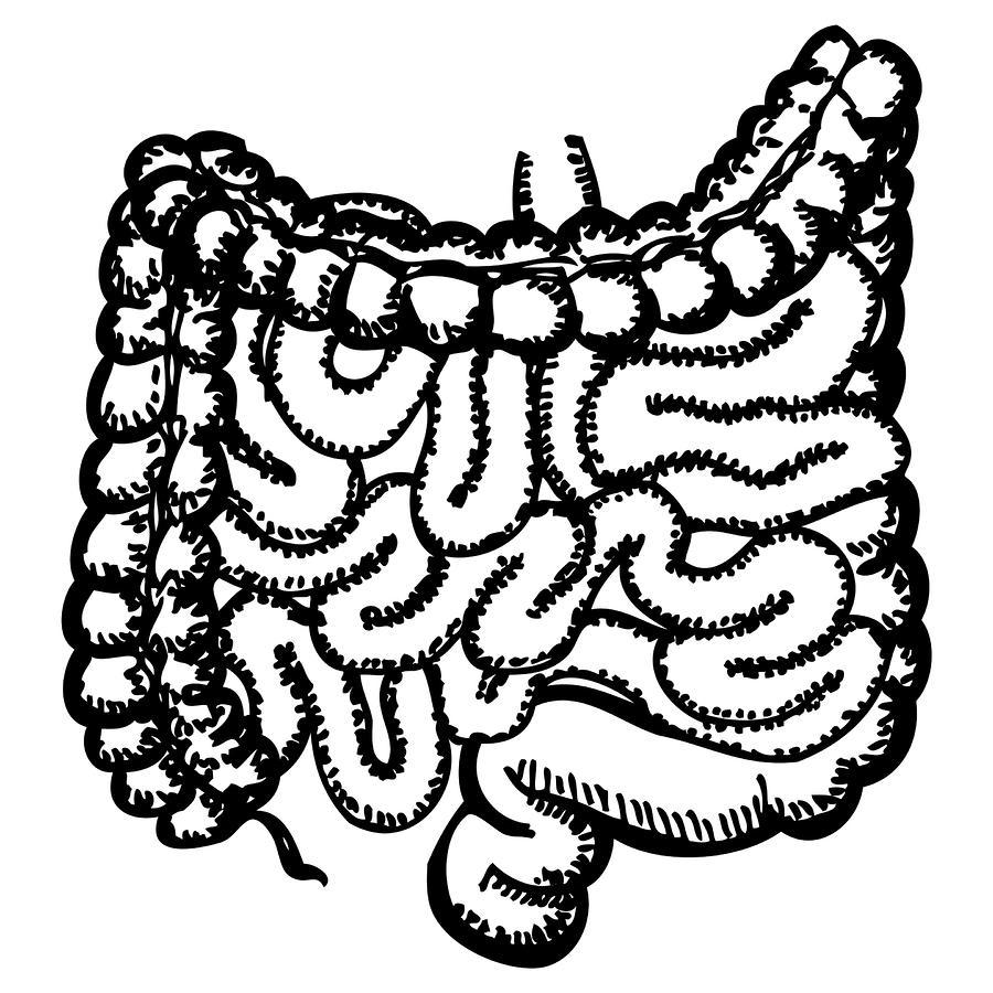 how to draw intestines
