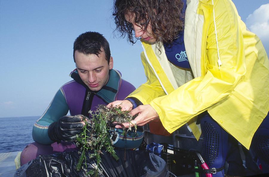 Invasive Seaweed Control Photograph