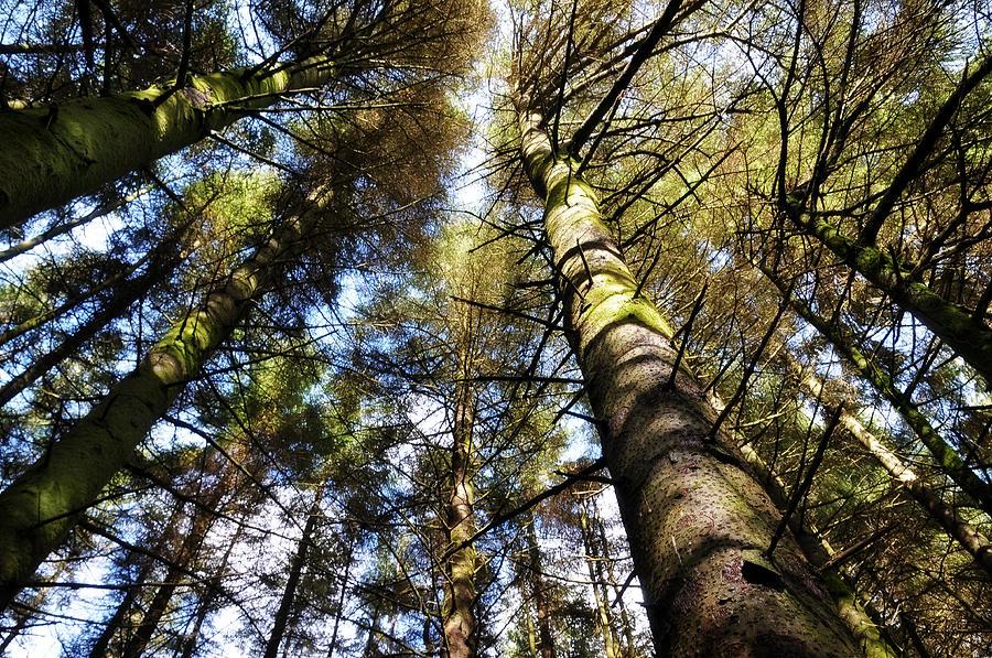 Tree Photograph - Invitation To The Waltz by Jenny Rainbow