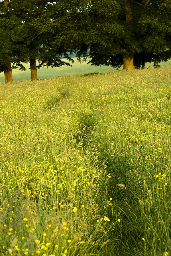 Day Photograph - Ireland Trail Through Buttercup Meadow by Peter McCabe