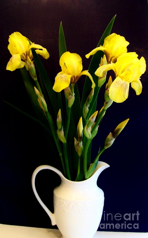 Iris Bouquet Photograph  - Iris Bouquet Fine Art Print