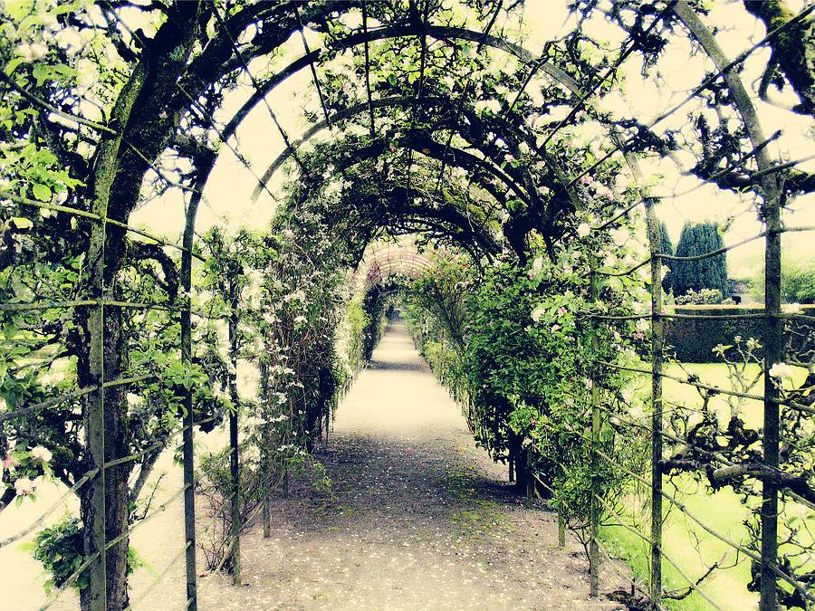 Irish Archway Photograph