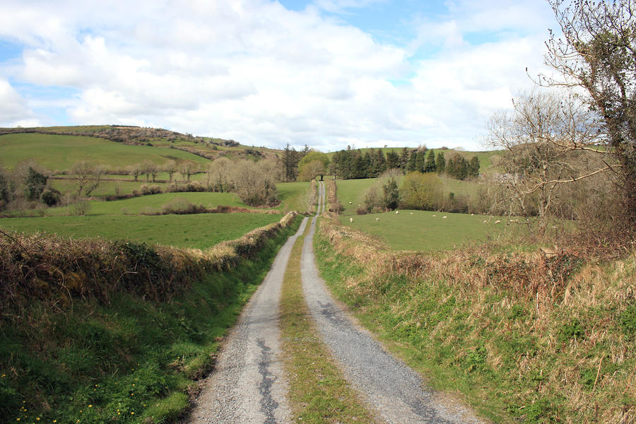 Irish Country Road Photograph