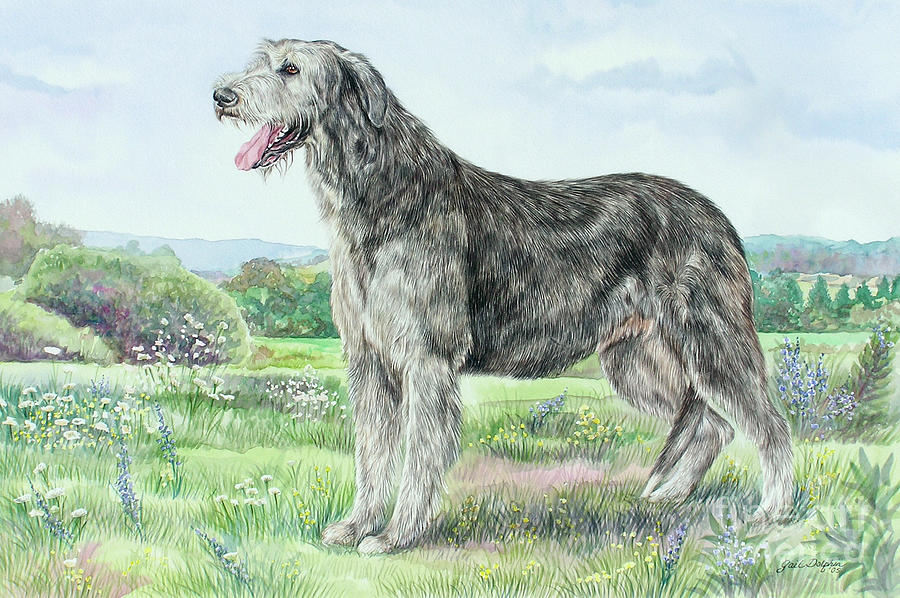 irish wolfhound descriptions the irish wolfhound is a breed of ...
