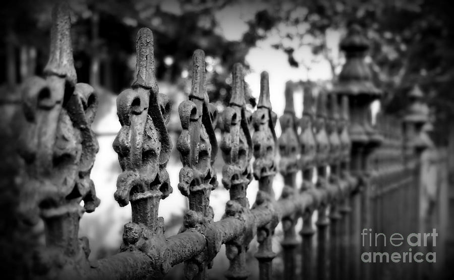 Iron Fence 2 Photograph