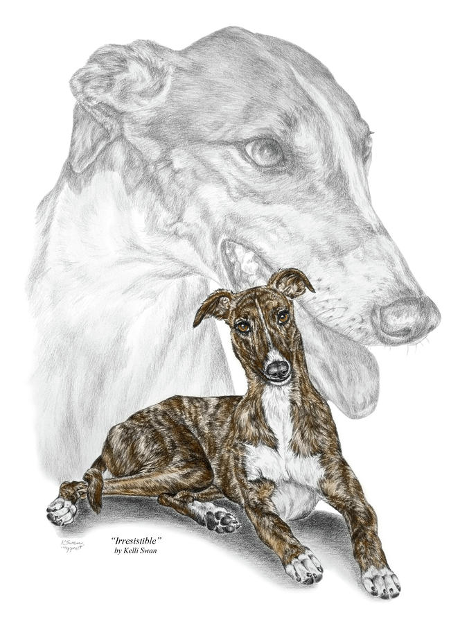 Irresistible - Greyhound Dog Print Color Tinted Drawing