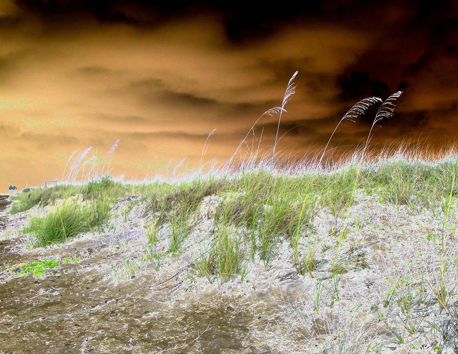 Island Dune Digital Art