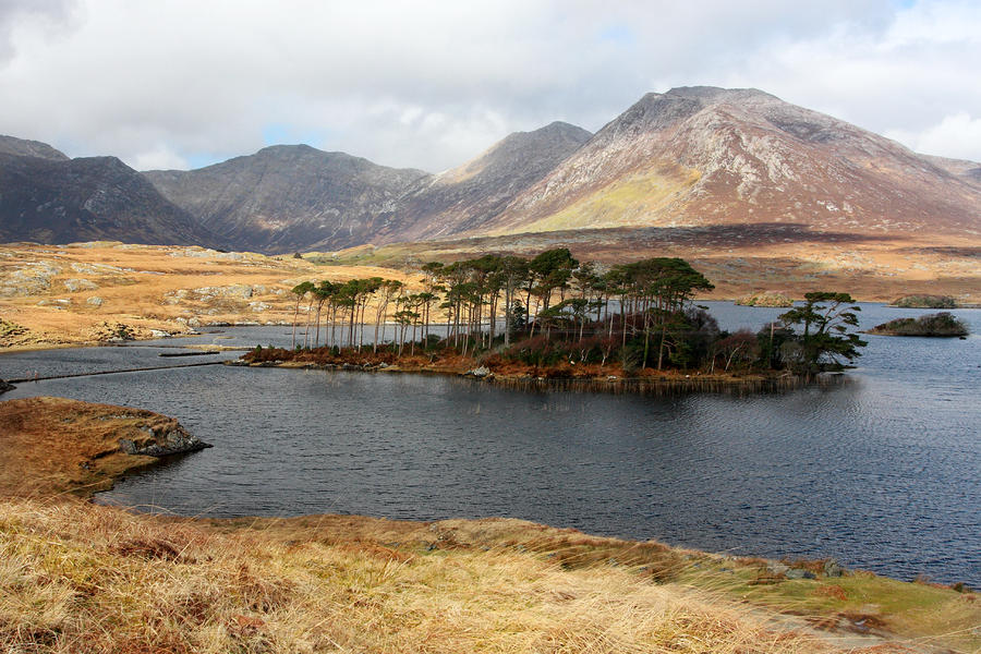 Island Of Trees In A Bare Connemara Landscape by Pierre ...