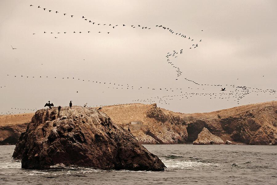 Islas Ballestas - Peru Photograph