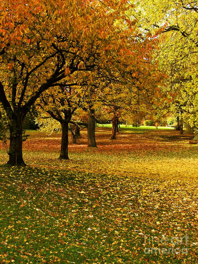 Its Autumn Photograph