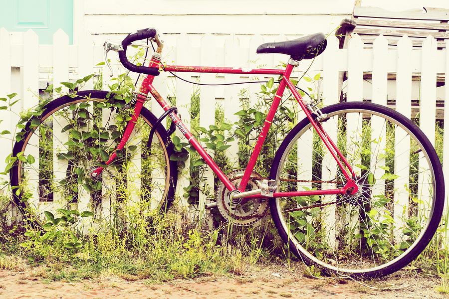Ivy Bike Photograph