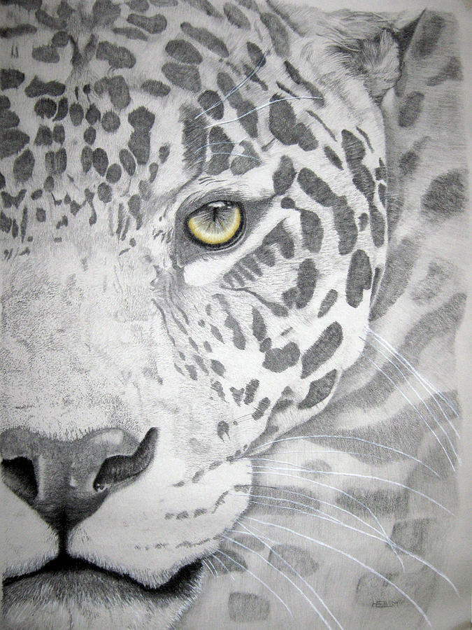 Jaguar Drawing  - Jaguar Fine Art Print