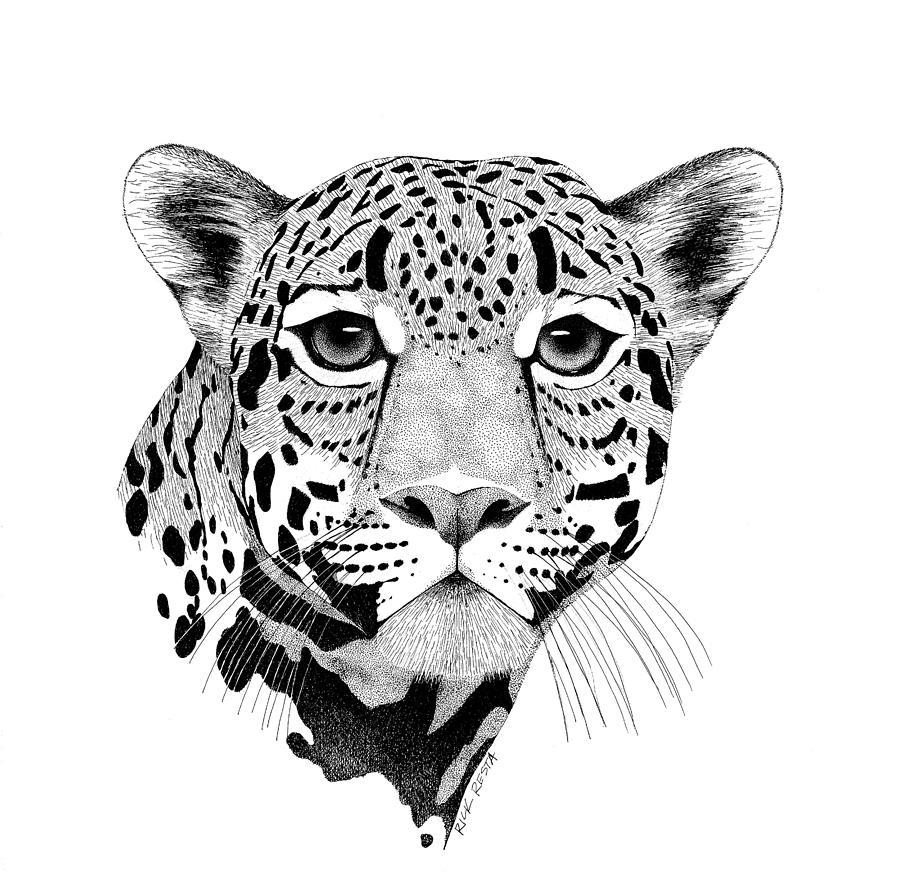 Line Drawing Jaguar : Jaguar cat drawing