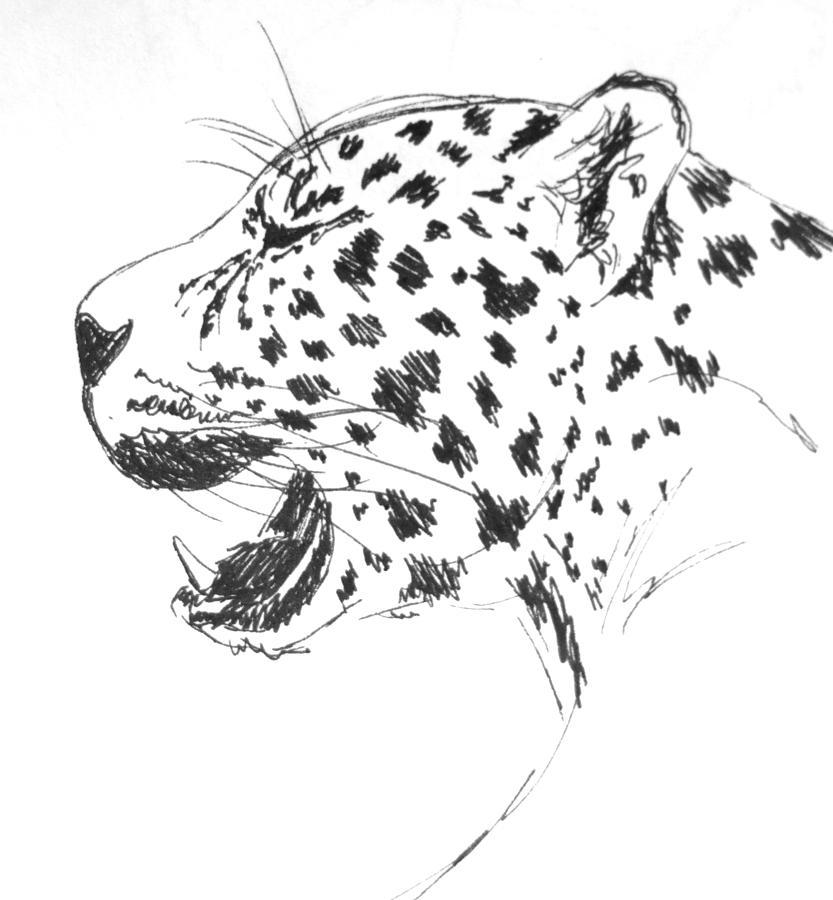 jaguar drawing - photo #24
