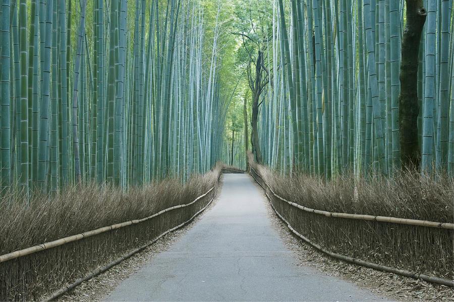 Japan Kyoto Arashiyama Sagano Bamboo Photograph