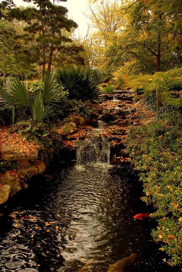 Japanese Botanical Garden By Steven Defelice