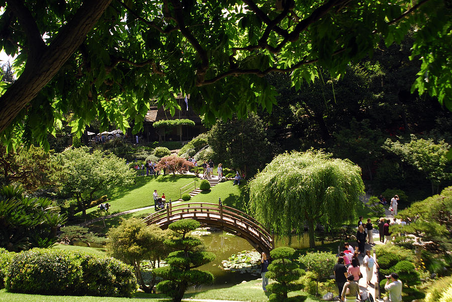 Japanese Garden Huntington Museum And Gardens Pasadena Photograph By Lonely Planet