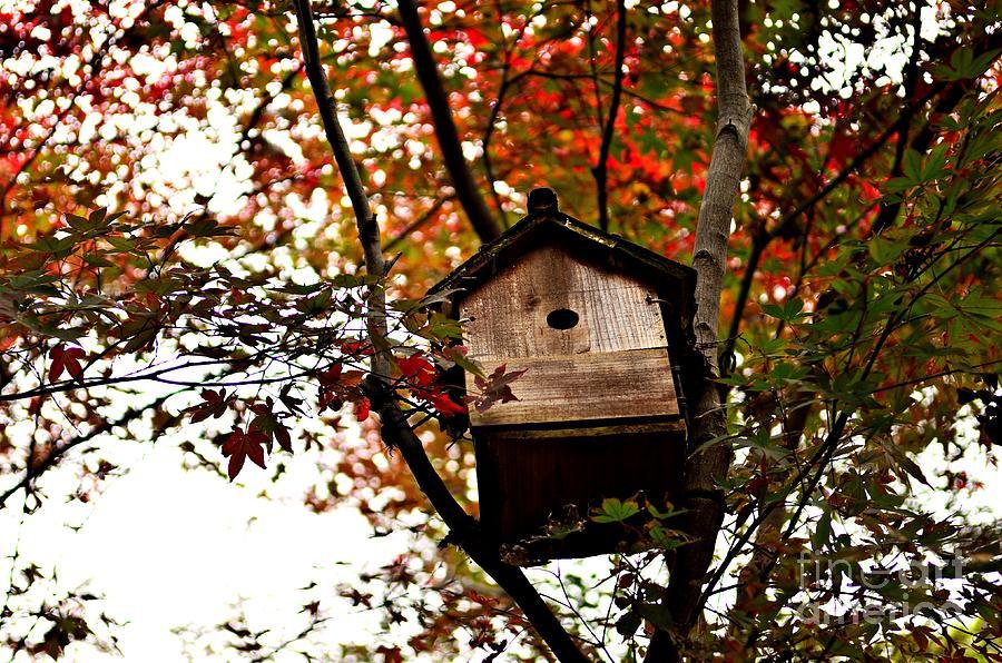 Landscapes Photograph - Japanese Garden In Autumn 5 by Dean Harte