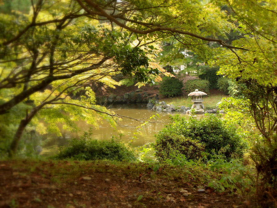 Japanese Garden In Kyoto By Carol Groenen