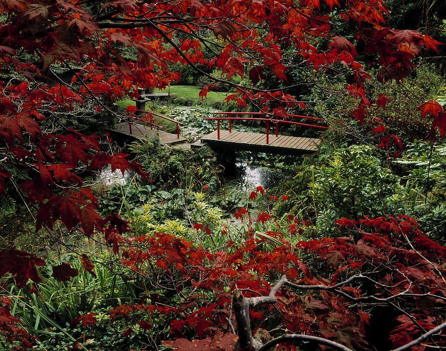 Japanese Garden, Through Acer In Photograph