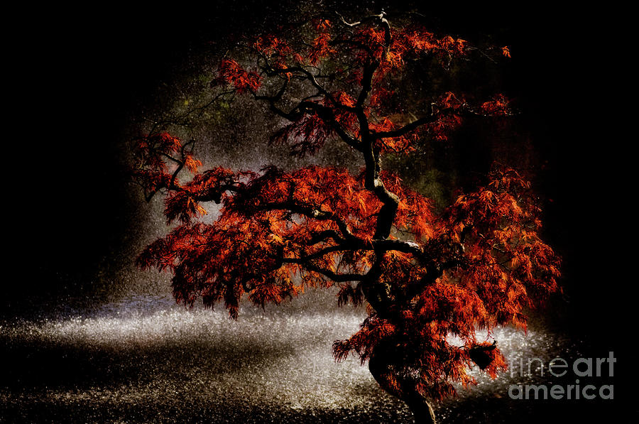 Japanese Maple Photograph  - Japanese Maple Fine Art Print