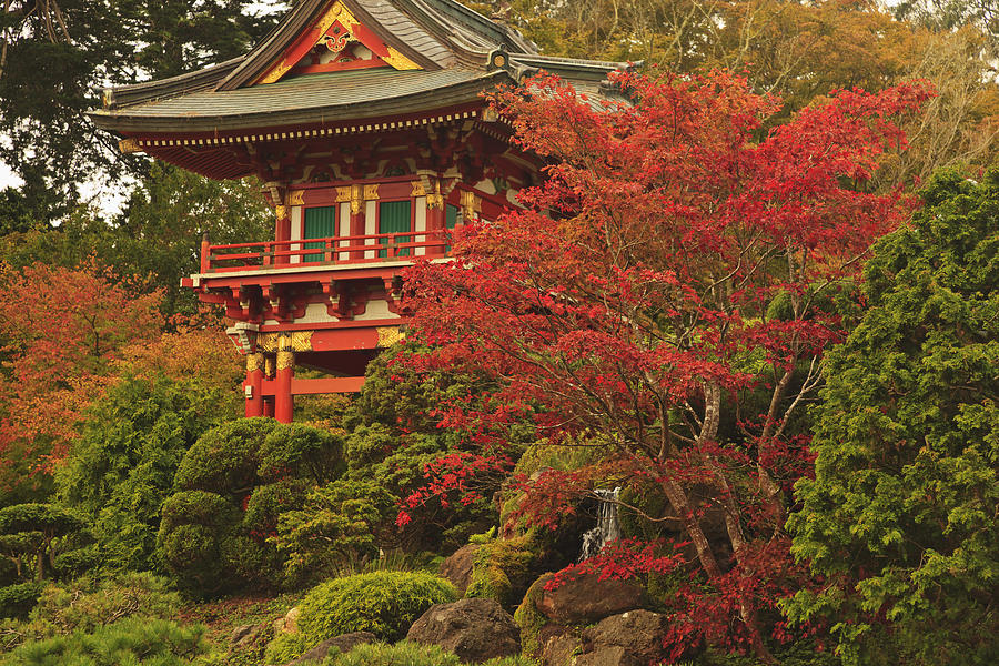 Japanese Tea Garden In Golden Gate Park Photograph  - Japanese Tea Garden In Golden Gate Park Fine Art Print