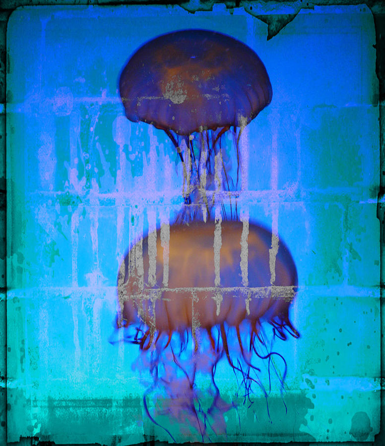 Jelly Stone Sandwich Photograph  - Jelly Stone Sandwich Fine Art Print