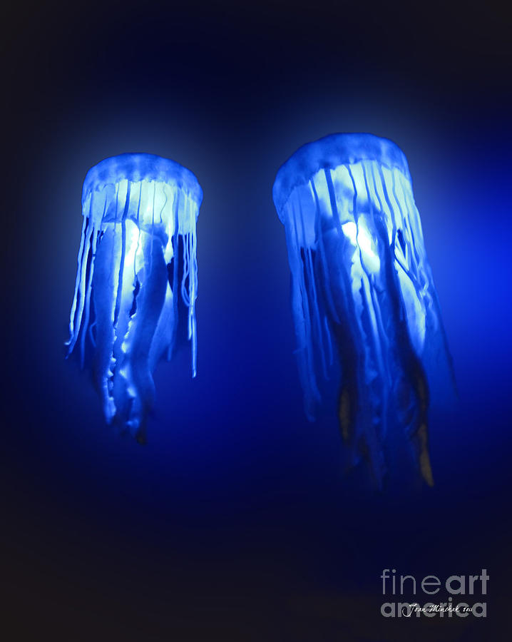 Jellyfish In Maui Ocean Center Photograph