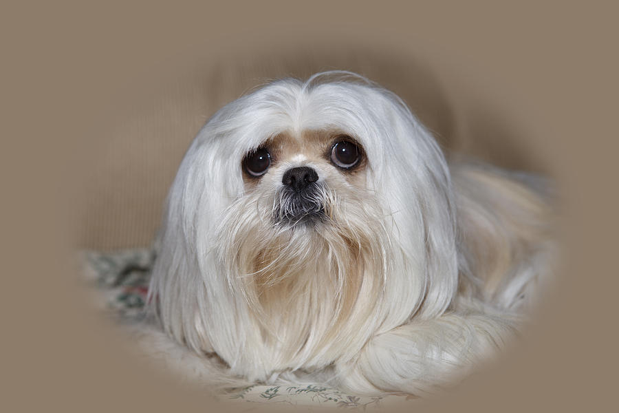 Photograph - Joliedog5vigbeige by Cecil Fuselier