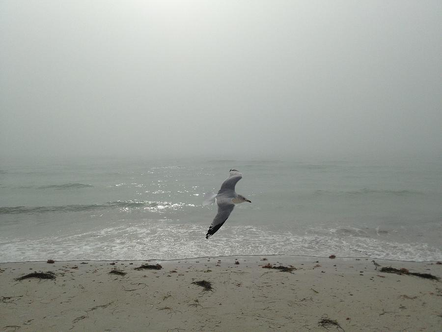 Seagull Photograph - Jonathan About To Ascend by Kerry McPhee