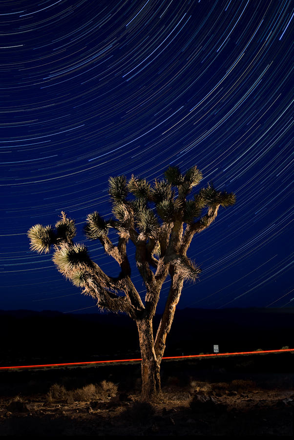 Joshua Tree And Star Trails Photograph  - Joshua Tree And Star Trails Fine Art Print