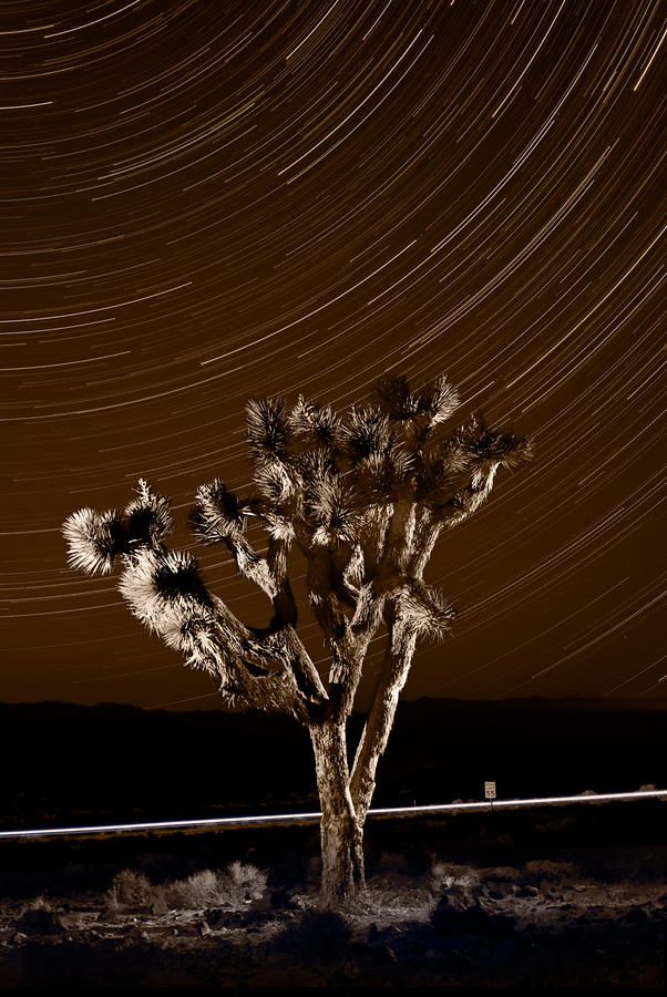 Joshua Tree Night Lights Death Valley Bw Photograph