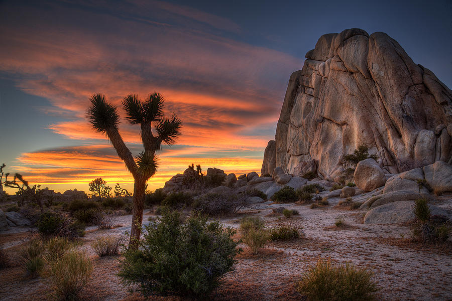 Joshua Tree Sunset Photograph