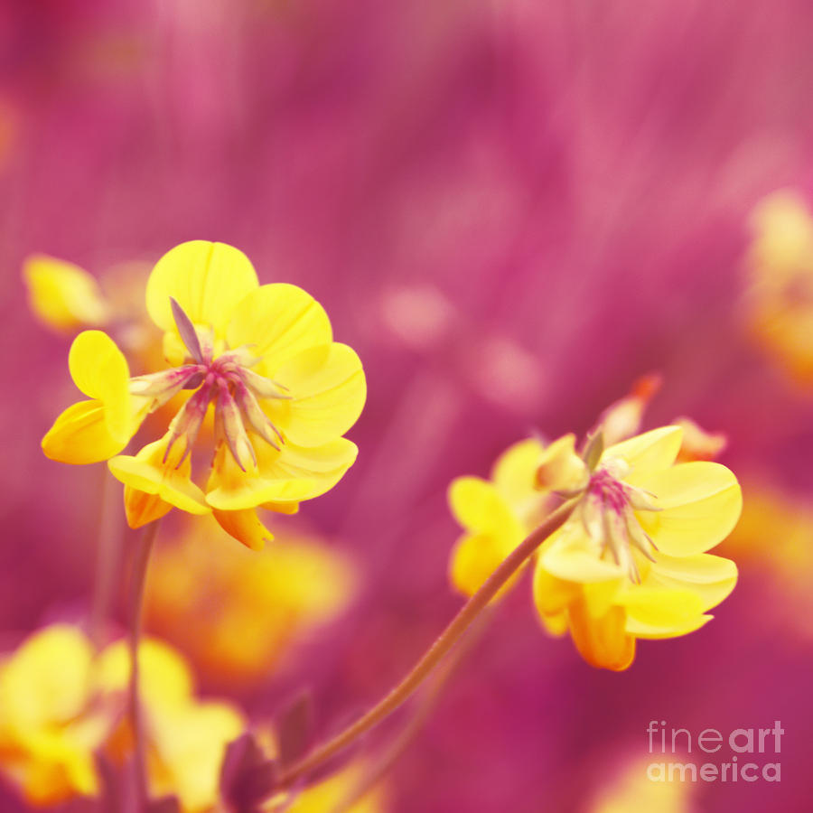 Joyfulness Photograph  - Joyfulness Fine Art Print