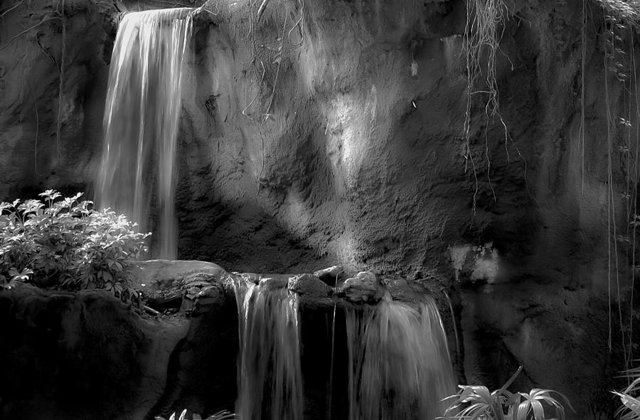 Jungle Falls Bw Photograph  - Jungle Falls Bw Fine Art Print