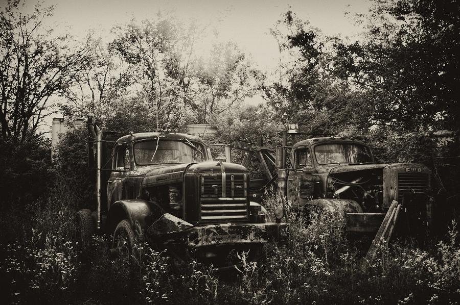 Junkyard Dogs IIi Photograph