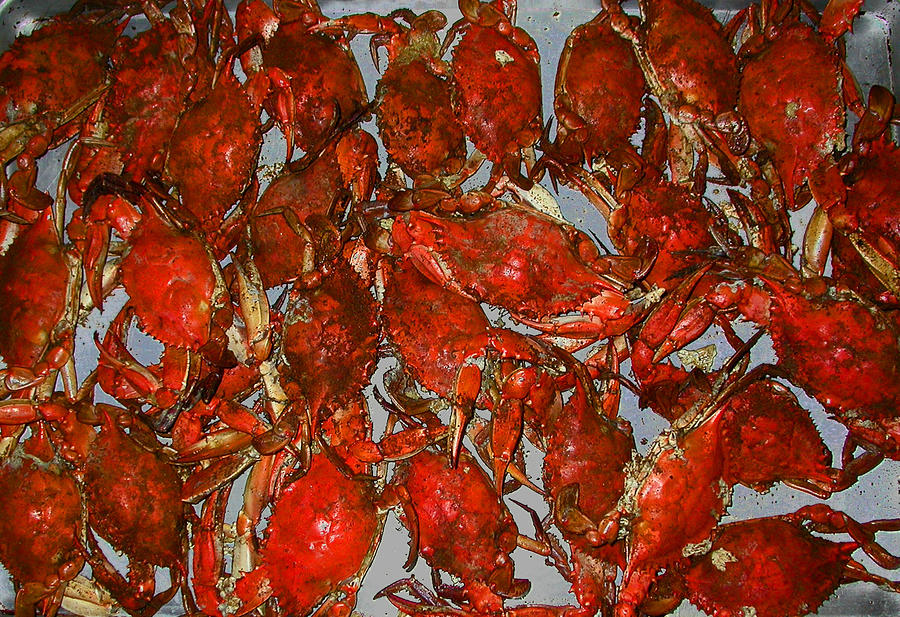 Just Crabs Photograph