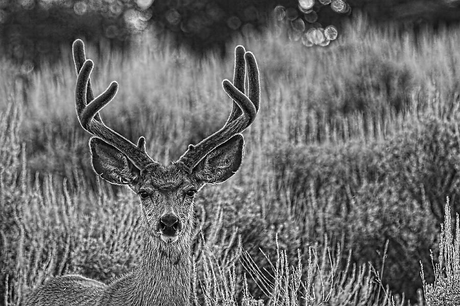 Just One Buck Photograph