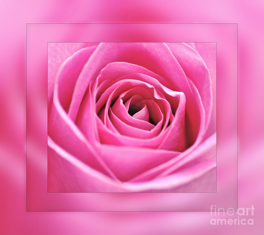 Just Pink Photograph  - Just Pink Fine Art Print