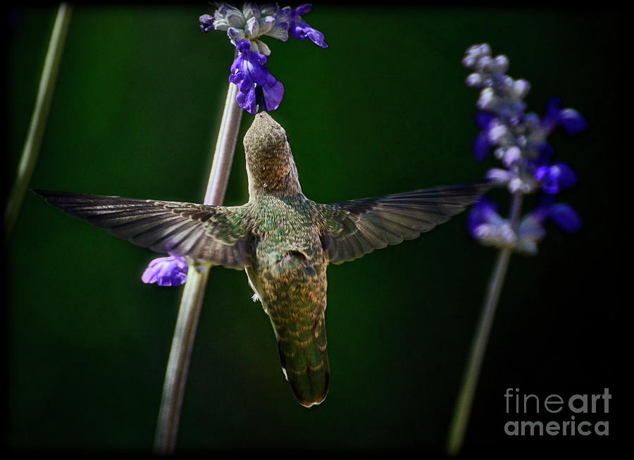 Just Spread Your Wings And Fly Photograph  - Just Spread Your Wings And Fly Fine Art Print