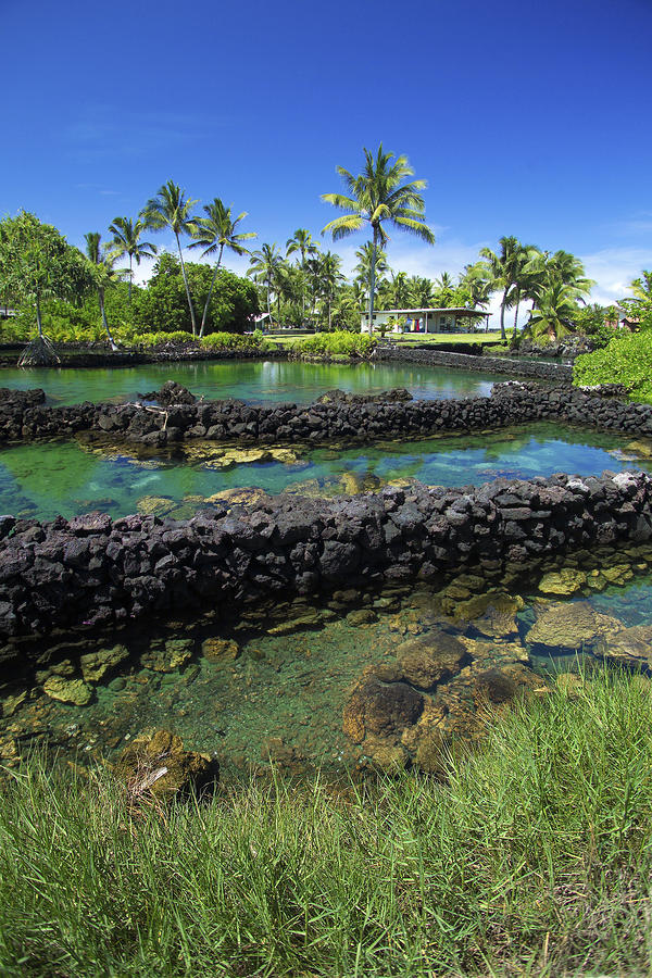 Kapoho fish pond by david cornwell first light pictures for Big fish ponds for sale