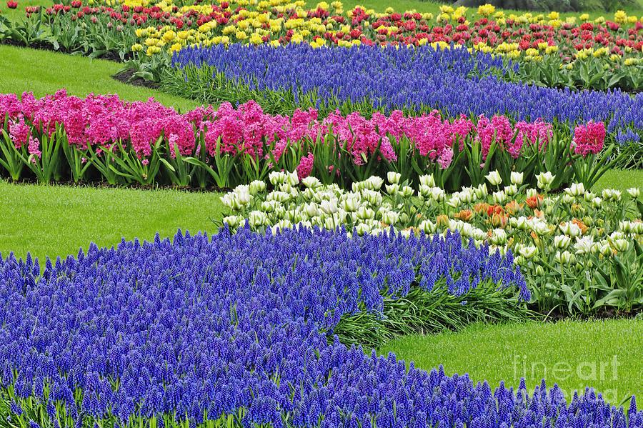 Keukenhof Gardens Photograph