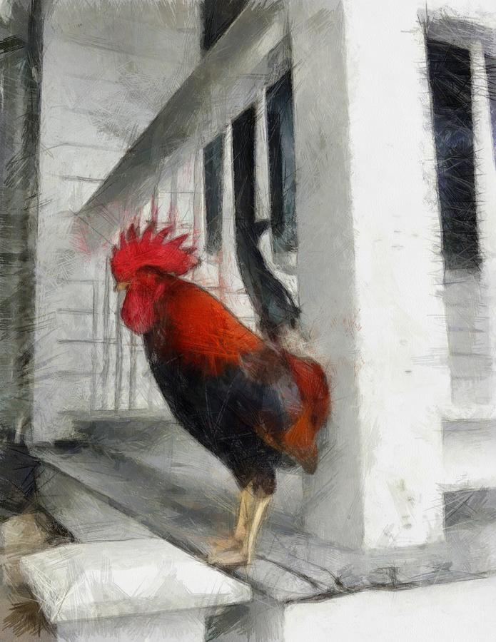 Key West Porch Rooster Photograph  - Key West Porch Rooster Fine Art Print
