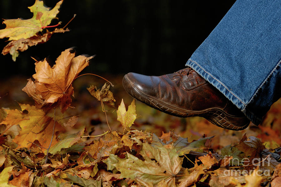 Kicking Fallen Autumn Leaves Photograph