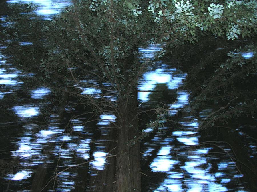 King Tree Photograph
