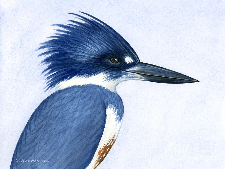 Kingfisher Portrait Painting  - Kingfisher Portrait Fine Art Print