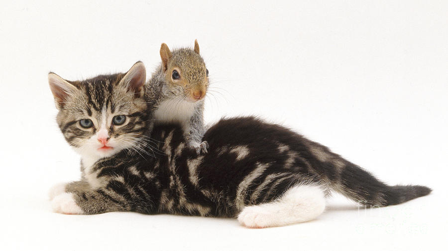 Kitten And Squirrel Photograph