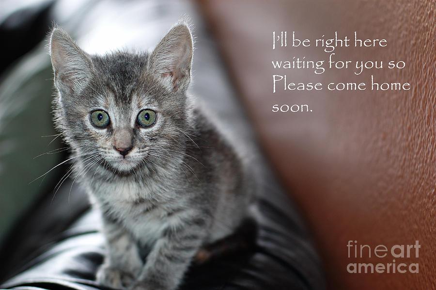 Kitten Photograph - Kitten Greeting Card by Micah May